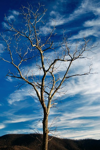 winter sky tree nature topf25 clouds landscape virginia nationalpark shenandoah naturescenes shenandoahnationalpark supershot interestingness40 calendarshot i500 drewmyers easternnorthamericanature abigfave nikond80 explore10jan07 drewmyersphotonet