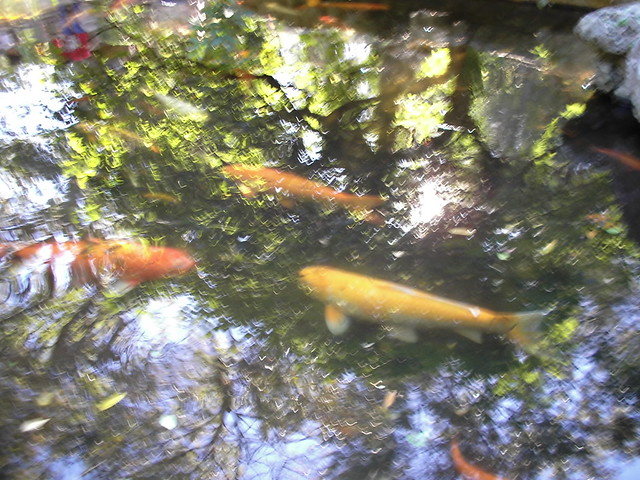 Tree climbing fish flickr photo sharing for Fish in a tree