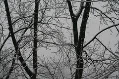 10.Snow.WindowView.RiverPark.SW.WDC.25feb07