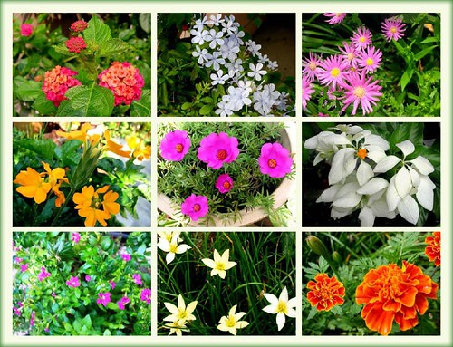 Names Of Common Flowers With Pictures