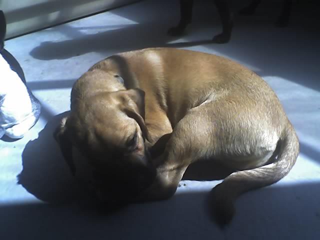 Pooch Planet Dog Bed Memory Foam