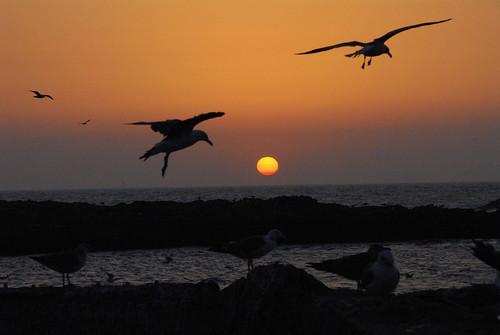 sunset sun seagulls bravo morocco blueribbonwinner mywinners abigfave flickrgold shieldofexcellence anawesomeshot impressedbeauty