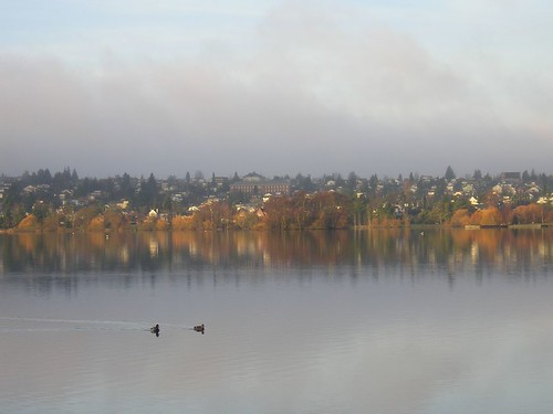 trees water sunrise reflections wildlife greenlake