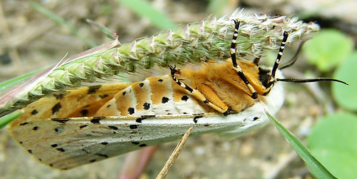 camp orange macro nature wings wildlife moth insects
