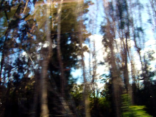 trees blur v allrightsreserved whiledriving nonmanipulated useofthisimagewithoutmypermissionisnotpermitted ©vm