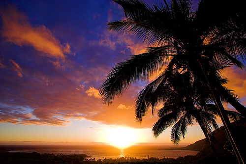 Sunset Under Palms