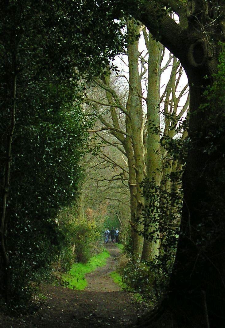 Book 1, Walk 12, Farnham to Godalming 2 Close to Tilford, 24 March '07.