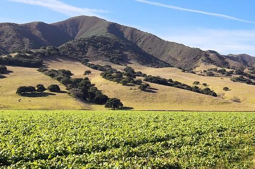 california nikon d70s montereycounty soledad dalmdad