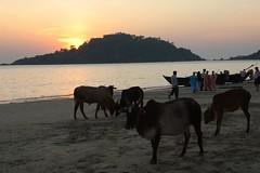 Palolem Goa (1)