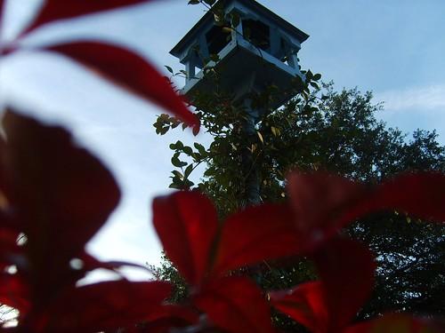 fern landscape vines birdhouse