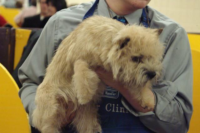 Show Dog Grooming Pennsauken Nj