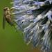 Nectar Thief by MikQuattro
