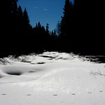 Clear Water Stream - Coyote tracks