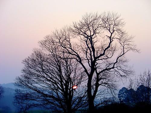 sunset tree march haze tarland awesomeshot anawesomeshot