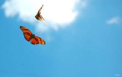 Blue Butterfly Flying In The Sky