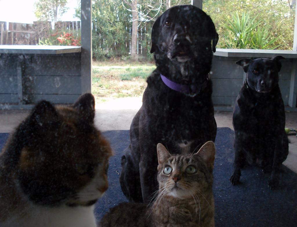 Dog Cat Pet Gates Abbotsford Bc