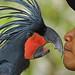 an eye on you... i gotta keep movin' on♫ bali bird park by bocavermelha-l.b.