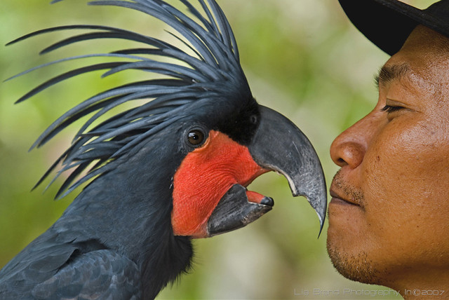 an eye on you... i gotta keep movin' on♫ bali bird park