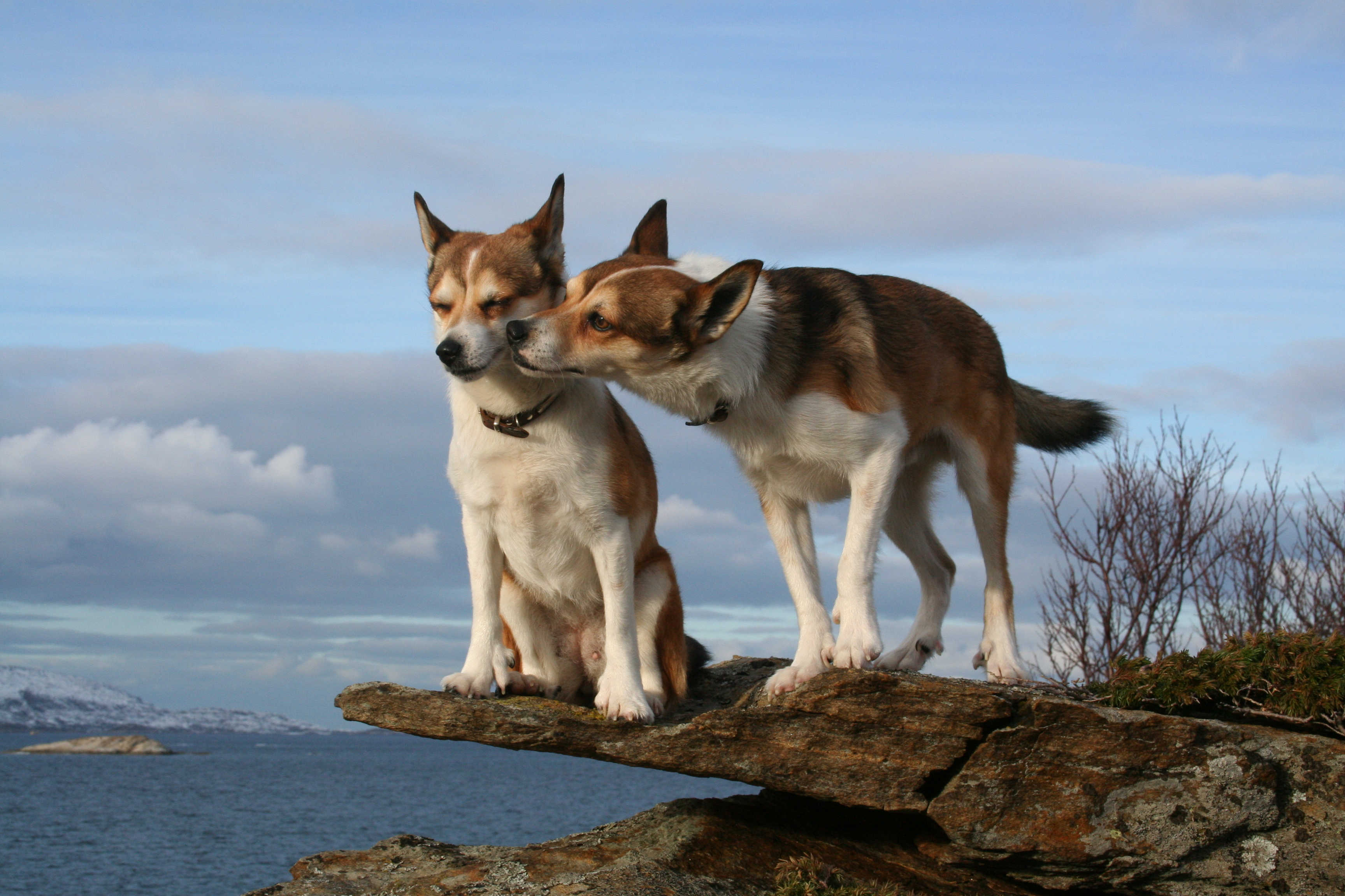 417311473_8a11857241_o_d - Canines in love - Photos Unlimited
