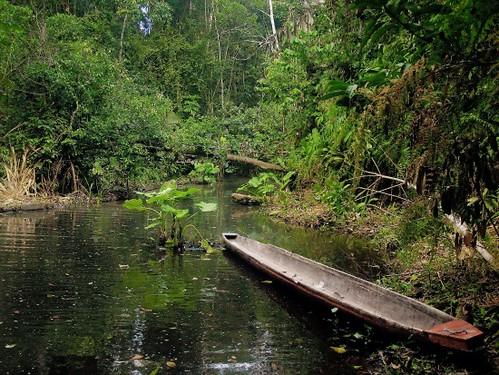 Through the Jungle in a Dugout Canoe