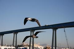 San Diego Harbor Crusie