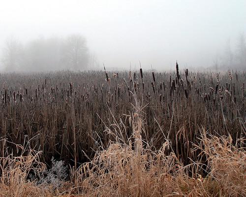 cold foggy marsh duane experiencewa ridgefieldnationalwildliferefuge