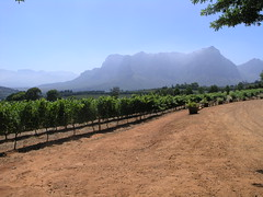 Looking towards the Franschhoek Valley from Delaire vineyard