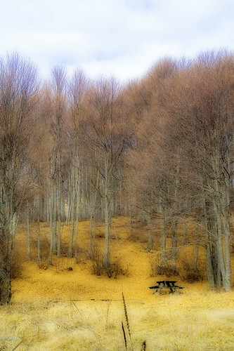 trees nature forest geotagged greece canoneos350d orton geo:lat=40660197 geo:lon=21419048