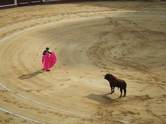 cattle-like mammal(1.0), bull(1.0), soil(1.0), sand(1.0), bullring(1.0), matador(1.0), bullfighting(1.0),