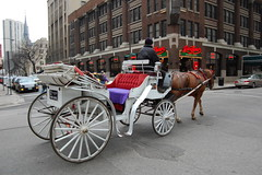 cart(0.0), vehicle(1.0), transport(1.0), mode of transport(1.0), coachman(1.0), horse harness(1.0), horse and buggy(1.0), land vehicle(1.0), carriage(1.0),