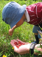 pickin' berries