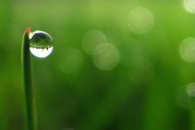blade of grass