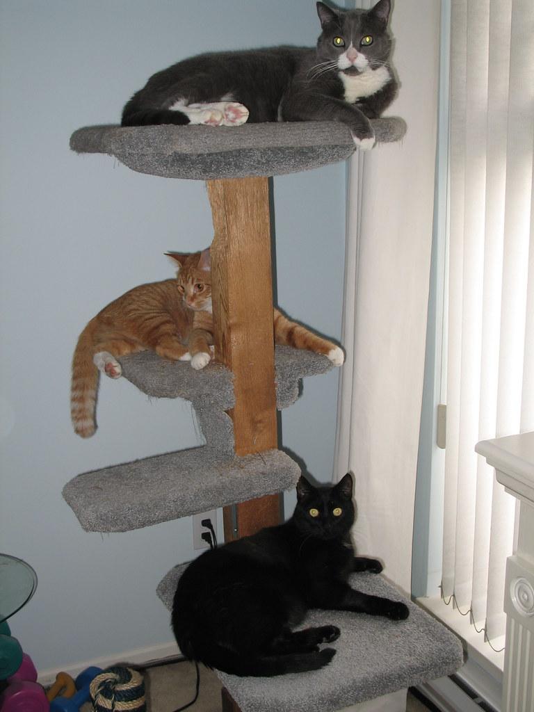 Tjflex2 39 s most interesting flickr photos picssr for Interesting cat trees