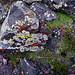 Lichen by serac