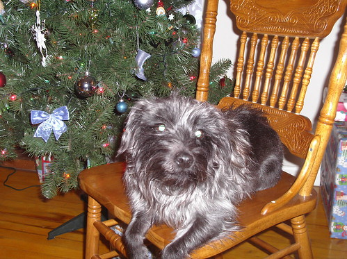 Pog's Christmas Photo 2006