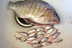 tilapia(0.0), animal(1.0), fish(1.0), fish(1.0), red seabream(1.0),