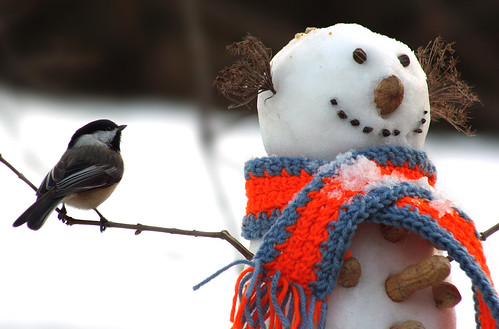Chickadee and the Snowman
