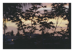 planted-in-the-sunset.jpg