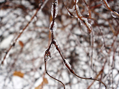 March 2, 2007 - 09:35 - Iced Droplets Branch