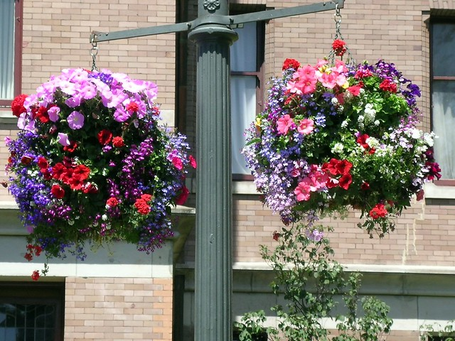 Victorian Hanging Flower Baskets : Found