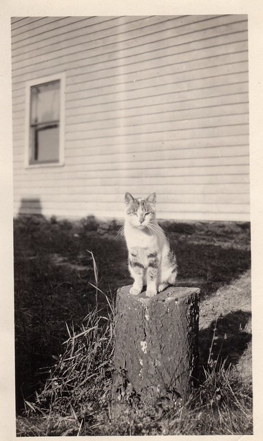 Cat on a Stump - Vintage Photo