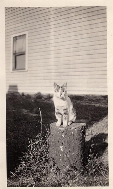 Cat on a Stump - Vintage Photo