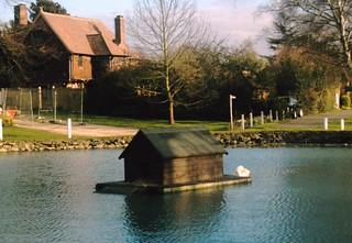 Pond life, Otford