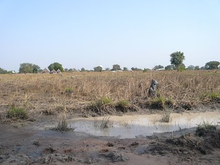 countryside between Thiet and Tonj