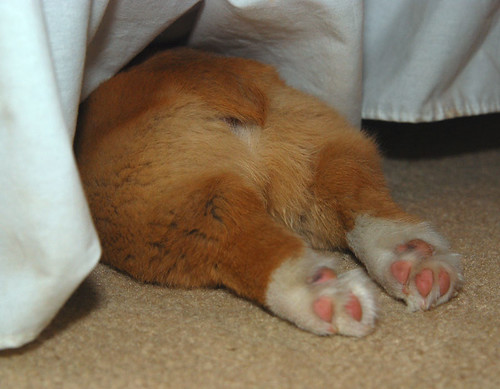 Sleeping under the bed