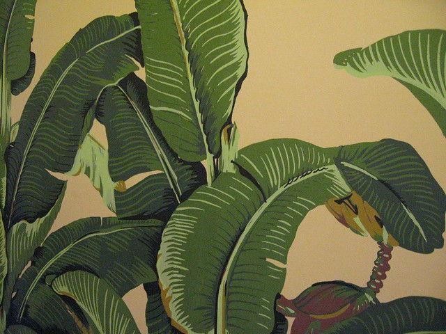 banana leaves wallpaper flickr photo sharing