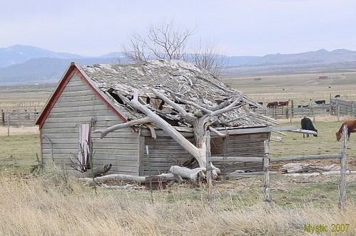 Tree On Shed In Adamsville Ut