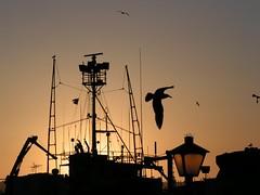 evening, silhouette, morning, dusk, sunset, sunrise,