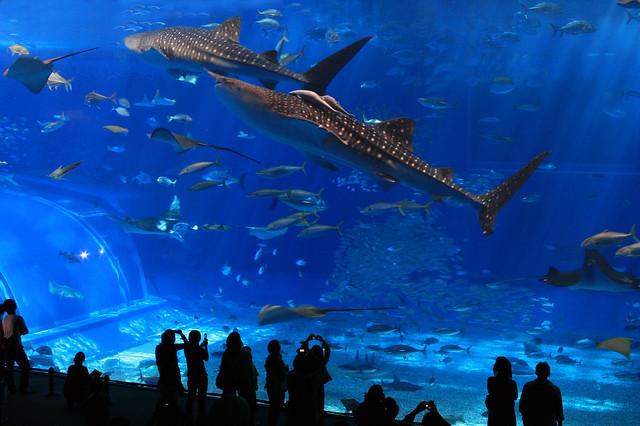 Churaumi Aquarium Flickr Photo Sharing