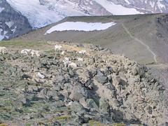 Mountain Goats at First Burroughs